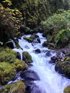 Multnomah Creek in the Columbia River Gorge by Shannon Wilkinson