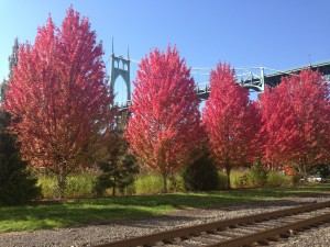 The St. Johns Bridge is looking lovely this fall.