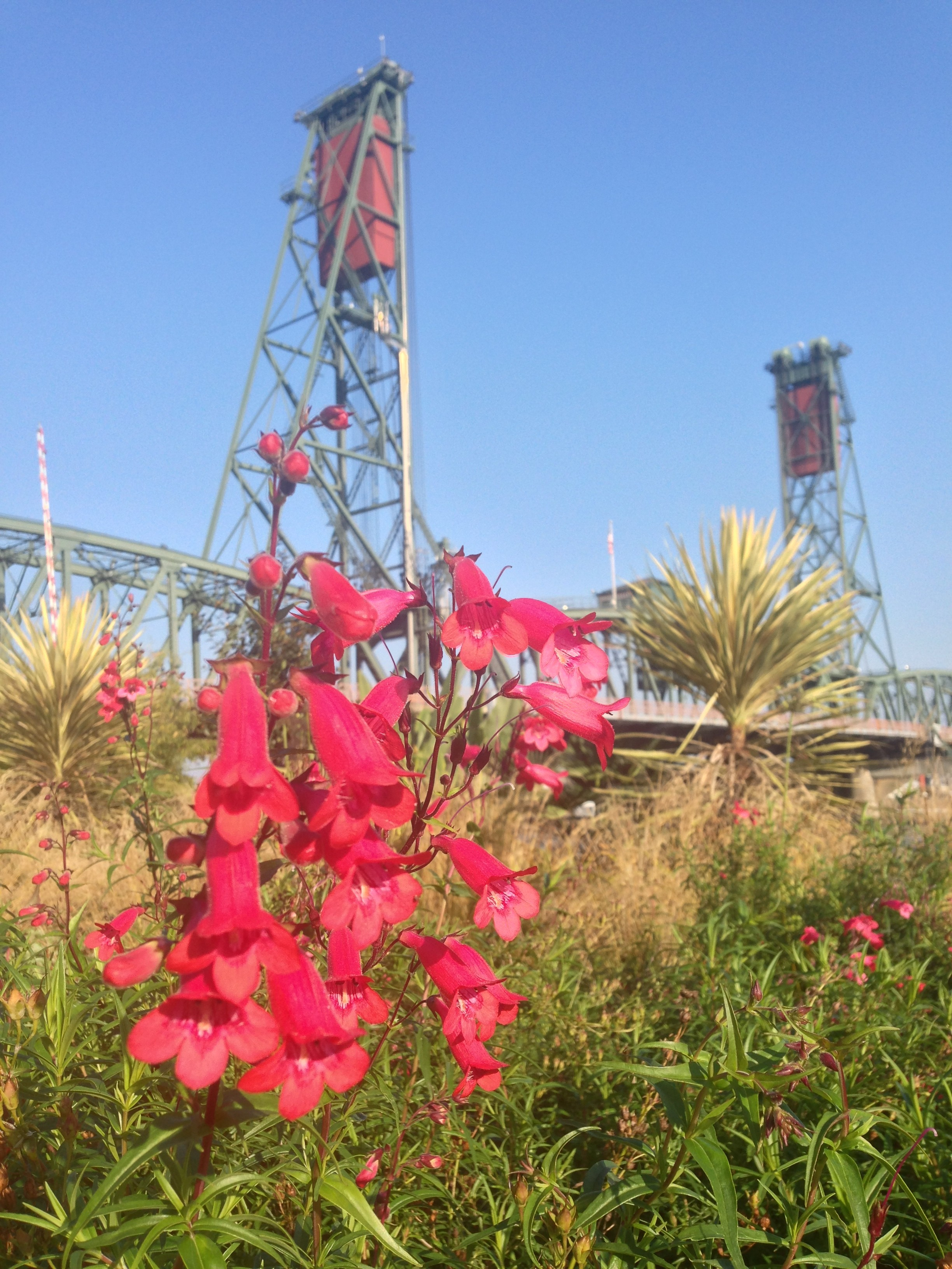 Flowers in front of the Hawthorne Bridge, Portland, Oregon